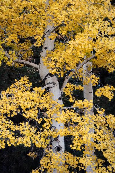 Arizona Autumn Color