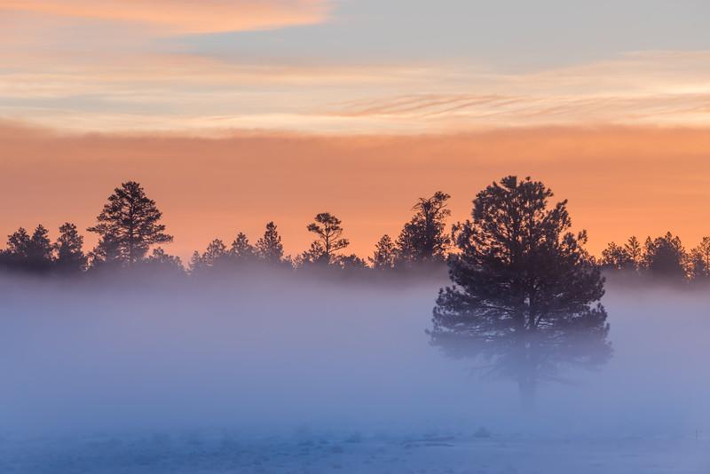 Northern Arizona Winter