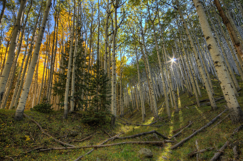 Inner Basin Trail near Flagstaff, AZ