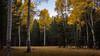 Flagstaff Meadow