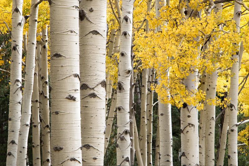 Autumn colors along Kachina Trail in Flagstaff