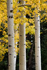 Autumn colors along Kachina Trail in Flagstaff