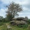 NT Brimham Rocks