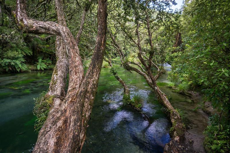 Tarawera River, Bay of Plenty