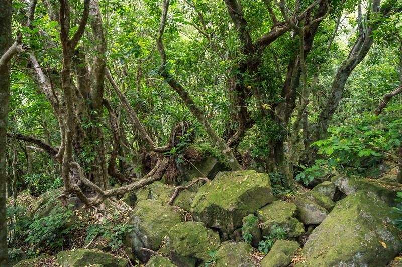 Coastal Forest, Coromandel