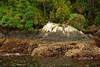 Sunbathing in Doubtful Sound