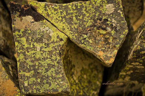 Moss on Rock, Mt John, Lake Tekapo