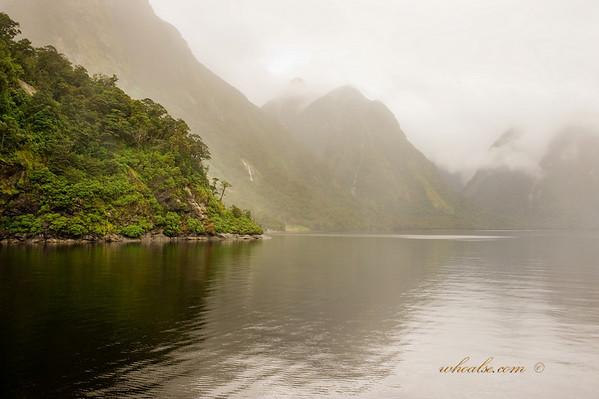Misty, Foggy, Drizzly in Doubtful Sound