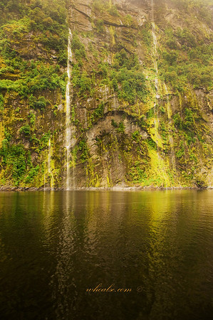 Waterfalls and mosses in Doubtful Sound