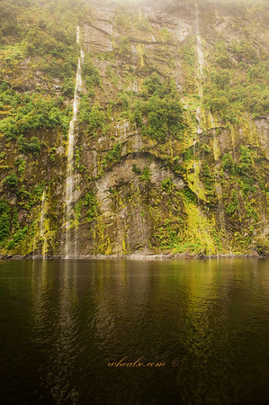Greens in Doubtful Sound