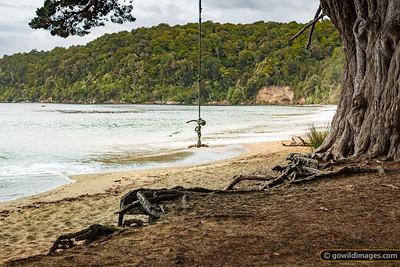 Sydney Cove Swing