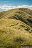 Hunter Hills Tracks