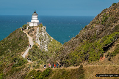 Nugget Point Lighthouse Track