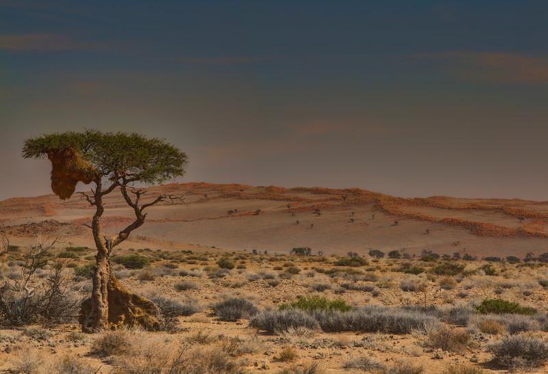 Bird's nest, Namib Desrt, Namibia