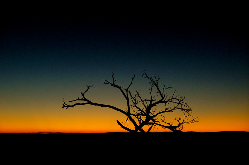 Venus and Mercury (fainter at 7 o'clock to Mercury, framed by branches).