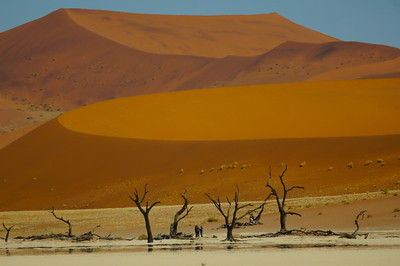 500 year dead acacia trees cut off from flowing water by shifting dunes in the Dead Vlei, Sossusvlei
