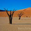 Dead vlei drowned trees