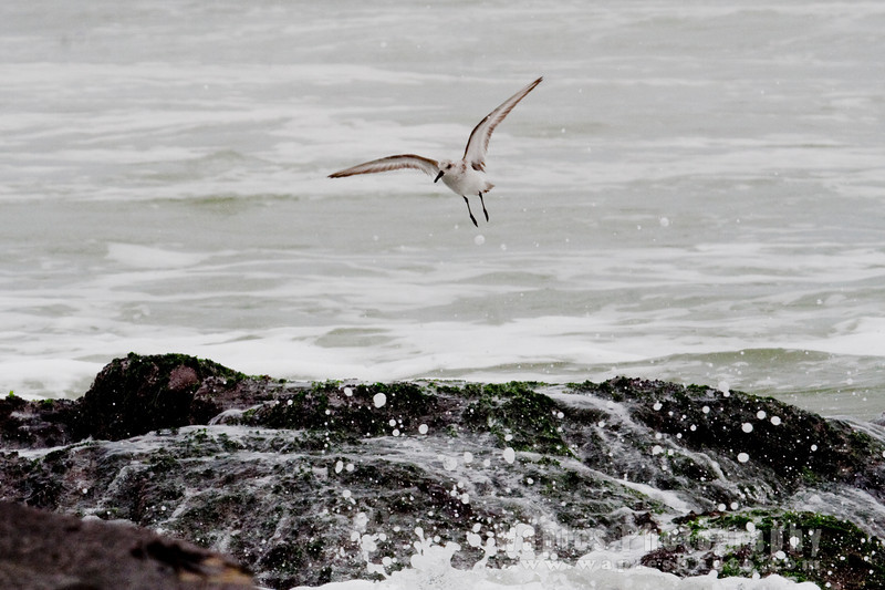 Gurgling Waves and Plover