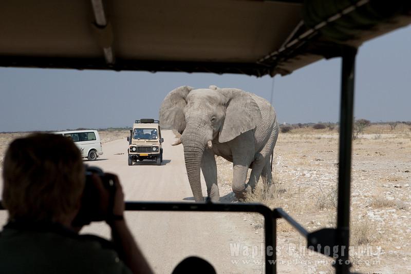Large Elephant