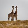 Giraffe on the Horizon