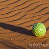Desert Gourd