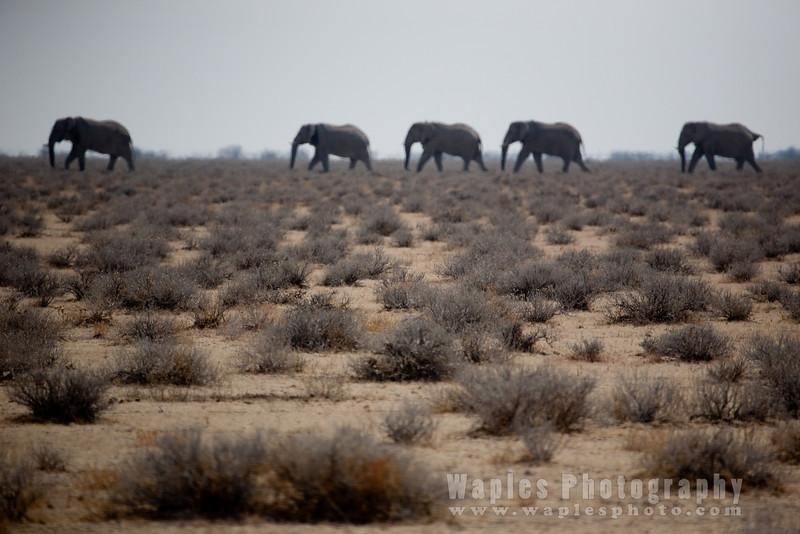 Elephants on the Horizon