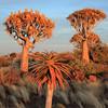 Namibia09-1247