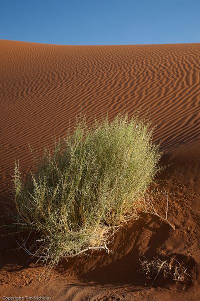 Namibia09-1031