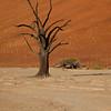 Namibia09-0980