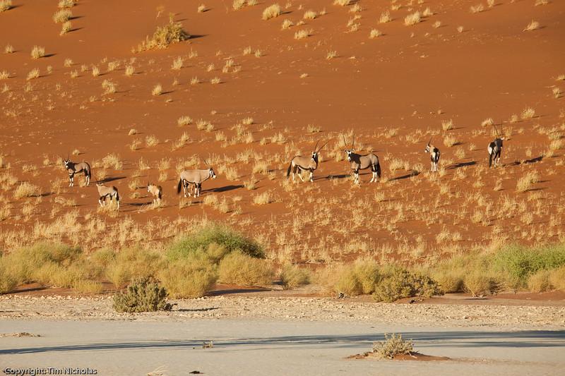 Namibia09-1083