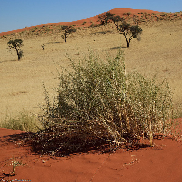 Namibia09-1148