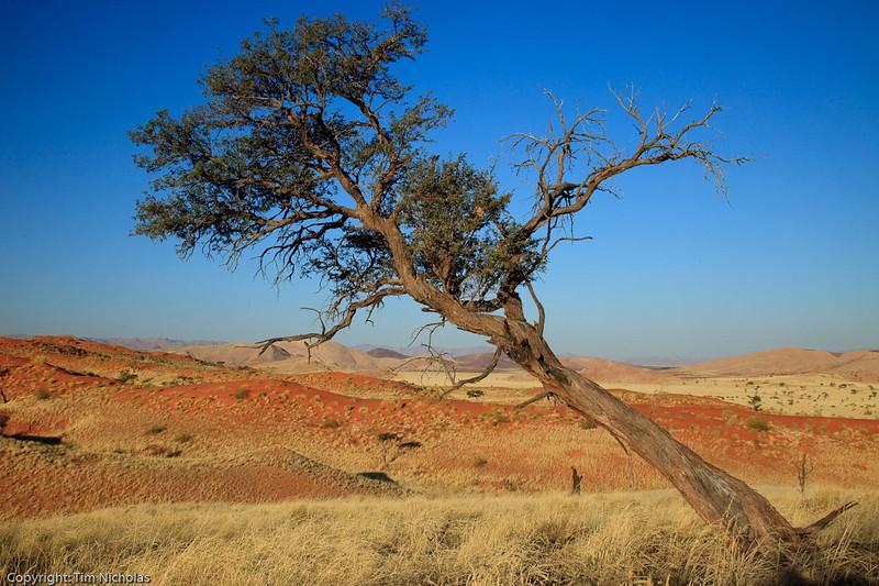 Namibia09-1171