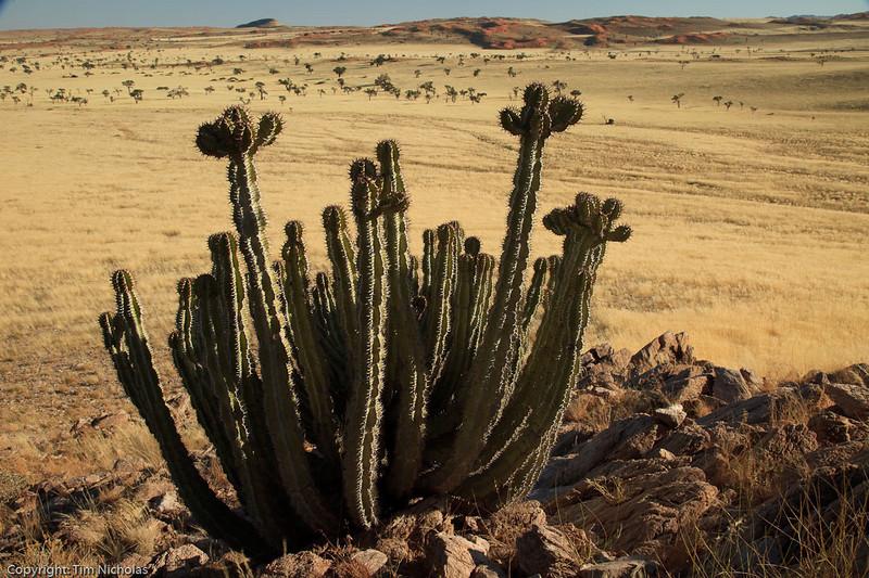 Namibia09-1142