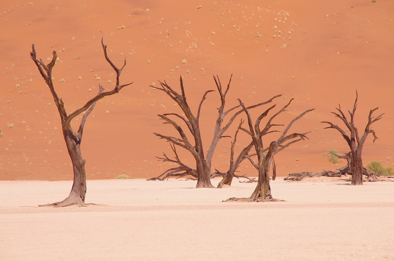 Deadvlei, a surreal place where we met more tourists than in the week before