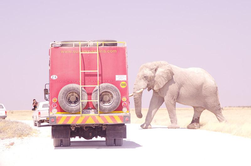 Elephant Crosswalk, Etosha NP