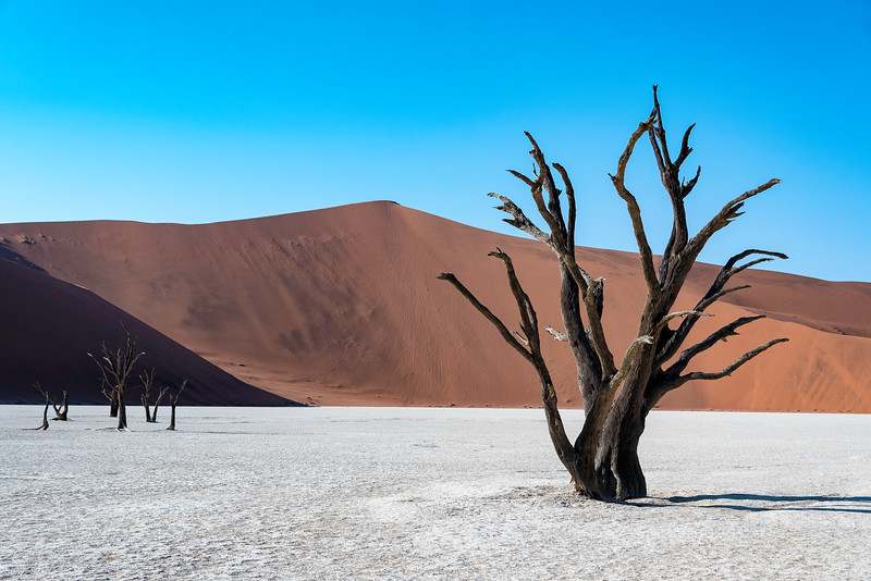 Petrified trees in Sossusvlei