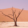 Deadvlei, a collection of dead trees which is also available as a windows desktop picture