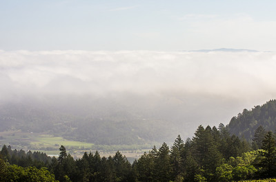 Fog/cloud layer creates a sea floor view of a mountain top and then surreal view of the valley floor