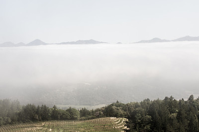 Napa valley fog/cloud layer