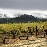 Wine_country_napa_grapes_fall1