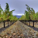 Fall WineCountry