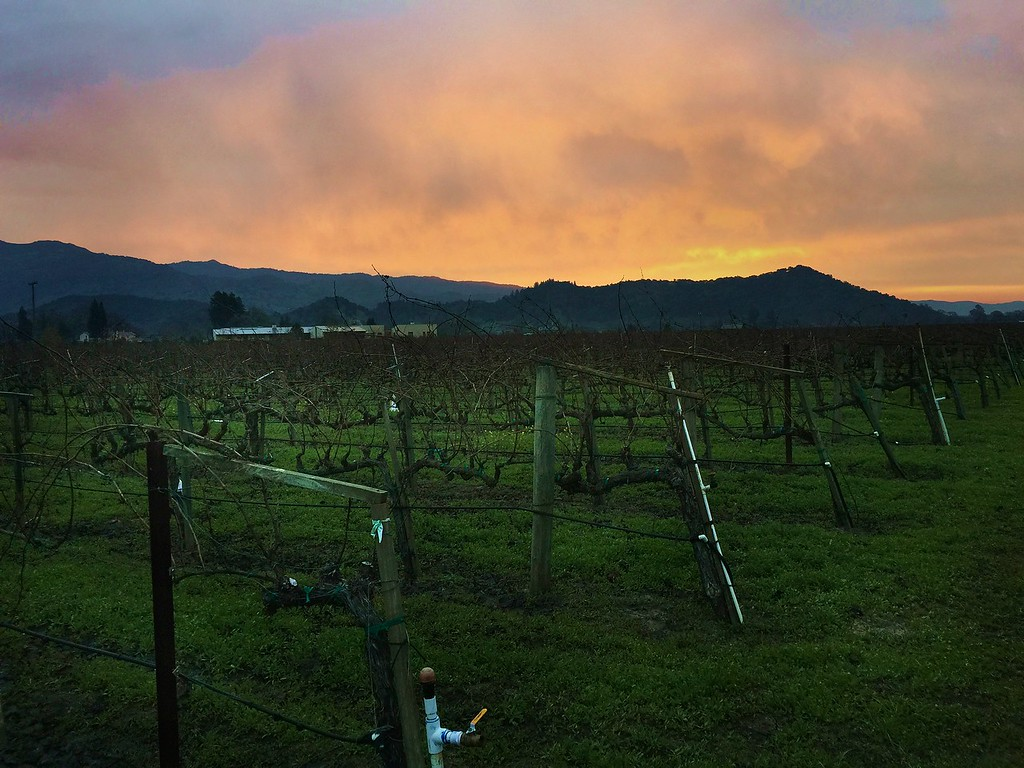 January dawn yountville 1/4