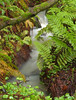 048Big Sur Ferns062