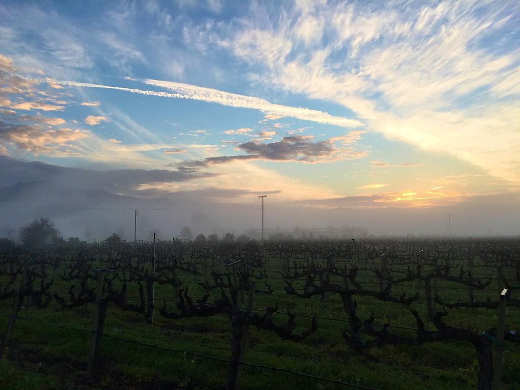 hazy Jan dawn Yountville