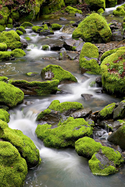 049Mossed covered Creek067