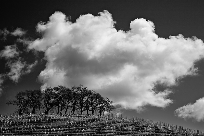 118Top of the vineyard