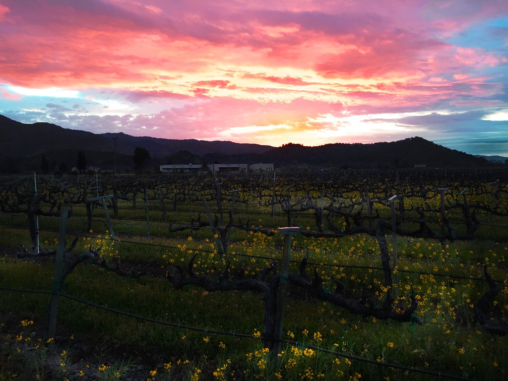 pre storm dawn with mustard yountville feb 15