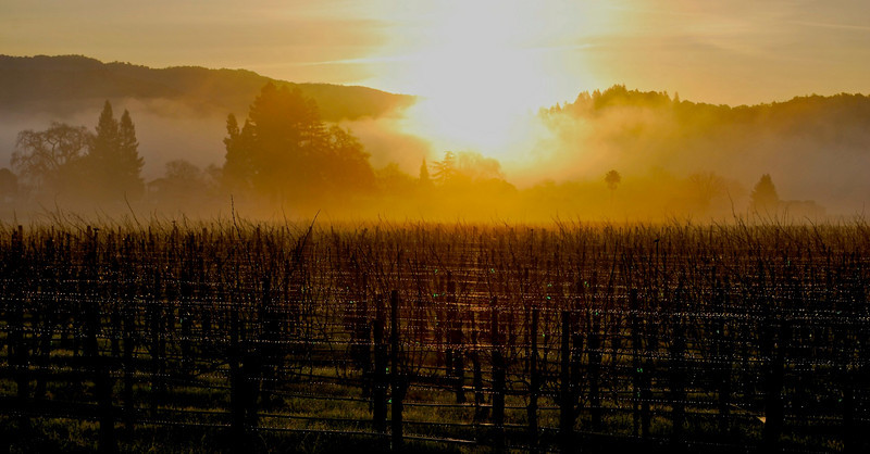 Dawn over Yountville vineyards February 2010