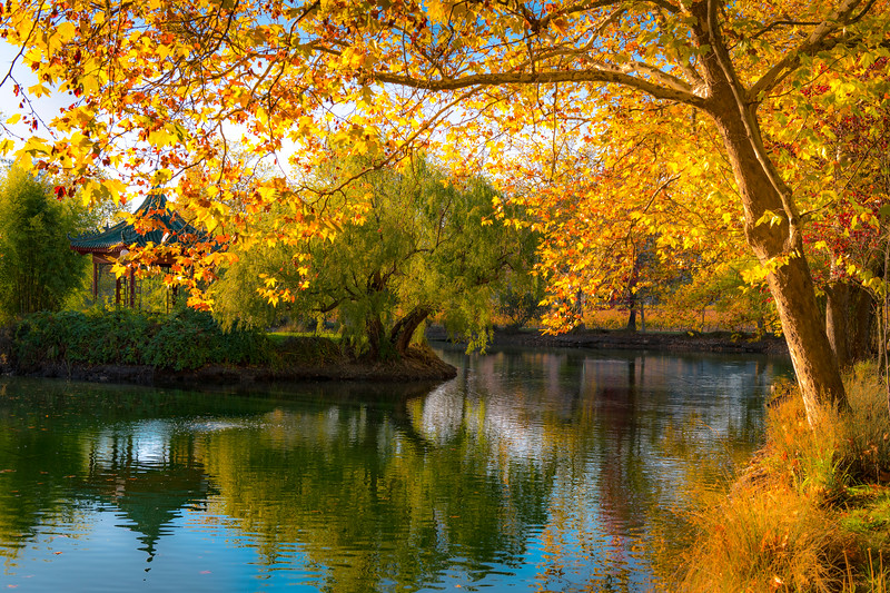 Fall-Colors-Chateau-Montelena-Winery_Napa-Valley-Wine-Country-California-Fall-Colors-Reflections-Anniversary-Gift-Wine-Country-Wine-Lover-Gift_DSC2831