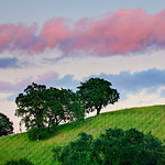 """Sonoma County Vineyards and Trees at Sunset""  The rolling hills and these nascent grape vine rows coming along on a summer evening.  Just the last hint of sunset as these clouds were glowing pink!  Can't wait to taste the wine from this vineyard!"